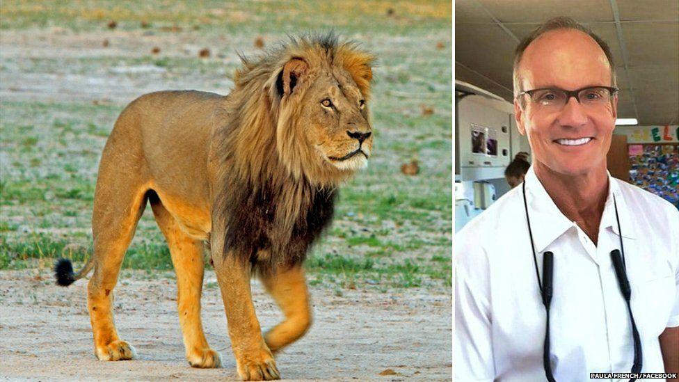 عذرخواهی دندانپزشک آمریکایی به خاطر شکار مشهورترین شیر زیمبابوه